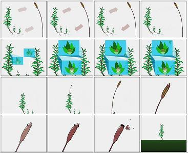 Отделы растений размножение мхов