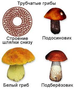 грибы паразиты какая от них польза