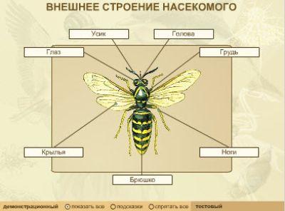 Просмотров.  Дата.  Внешнее строение насекомого. litechko.  1706. 1163.  Добавил.