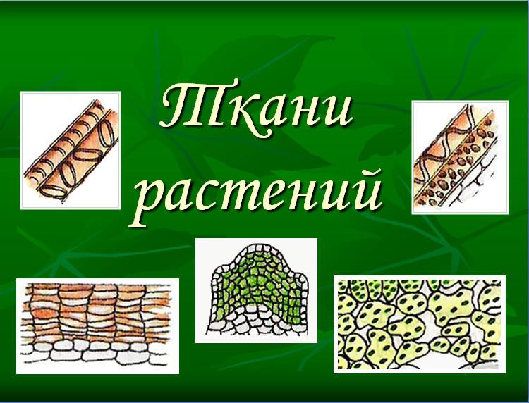 Tattoo эскизы russian название красивых