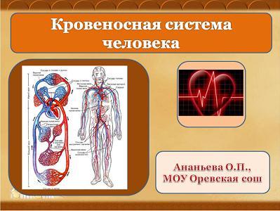 prezentatsiya-rabota-krovenosnaya-sistema-cheloveka