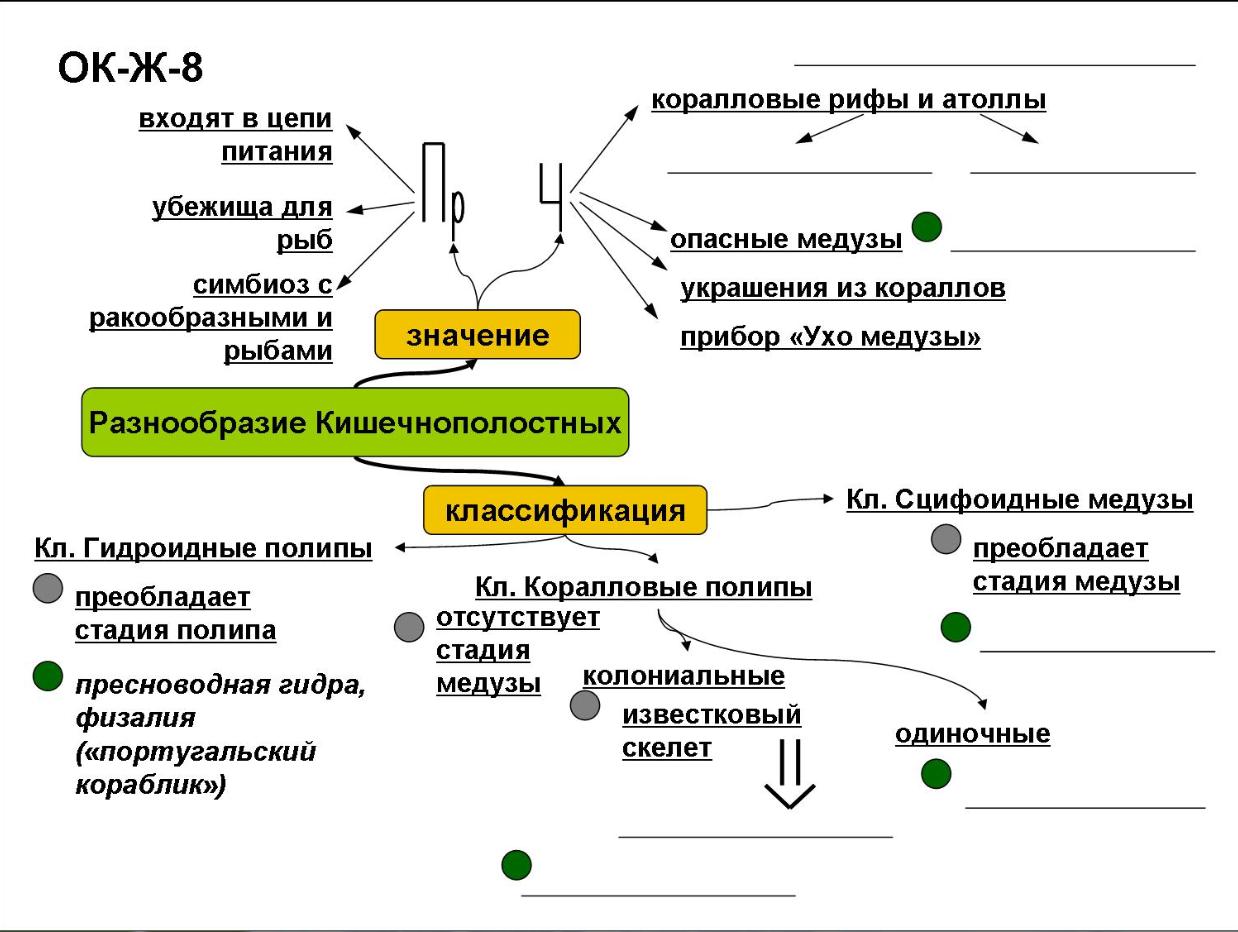 Кунсткамера в Санкт-Петербурге: музей 85